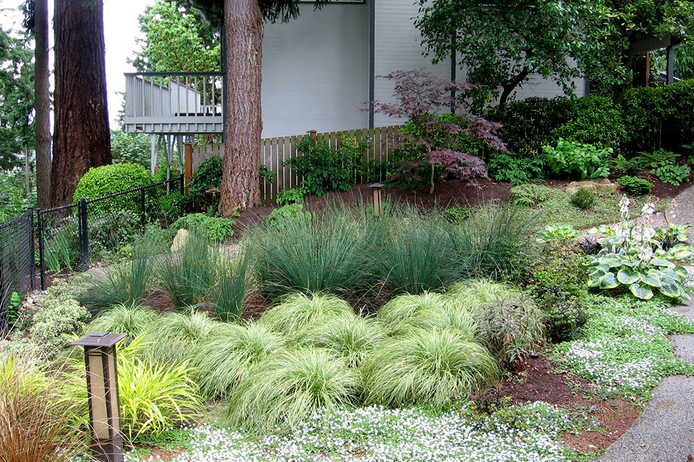 Susie landscape designs portfolio for Ornamental grasses for small spaces